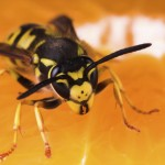wasp-inventory-control