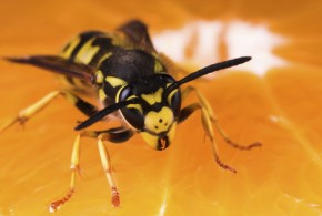 Wasp Inventory Control Stings Stockouts, Buzzes Productivity