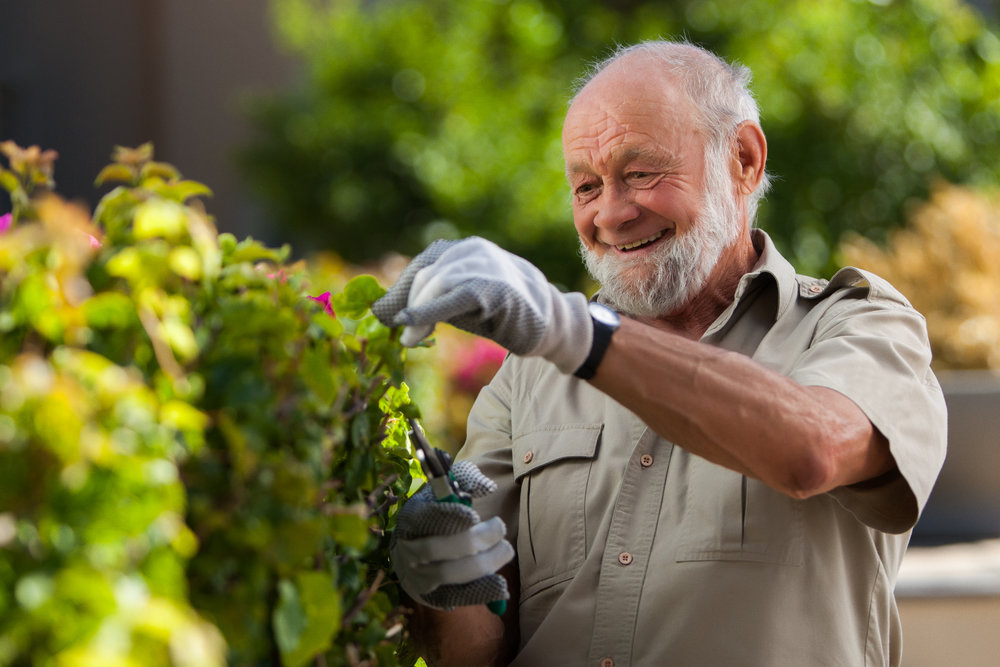 Male senior citizen getting ready to trim his bushes in South Africa.
